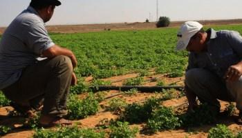 صورة تأجيل أقساط المزارعين لـ3 أشهر