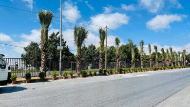 صورة جامعة عمان الاهلية تنفذ حملة لزراعة النخيل وتأهيل طريق السرو الرئيسي احتفالا بمئوية تأسيس الدولة الاردنية