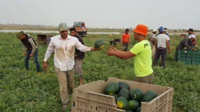 """صورة السماح لغزة بتصدير """"محدود"""" من المنتجات الزراعية"""