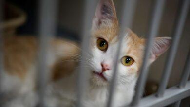 صورة السجن 5 سنوات لقاتل قطط في بريطانيا