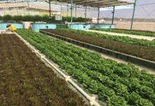 صورة منحة بـ10 ملايين يورو للقطاع الزراعي الأردني